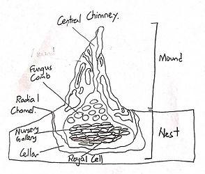 Structure of termite mount.jpg