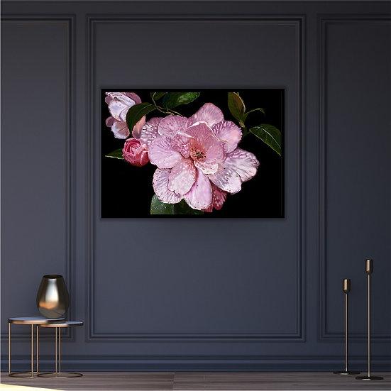 Camellia digital drawing poster. Unframed print. Black background.
