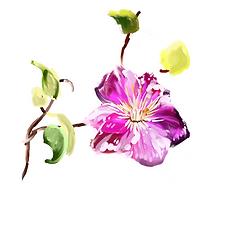 botanic garden 061 B.png