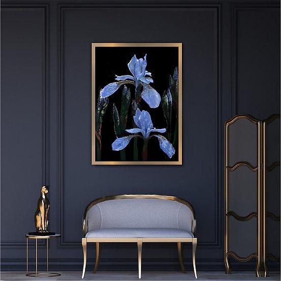 Irises illustration. Unframed print. White background.