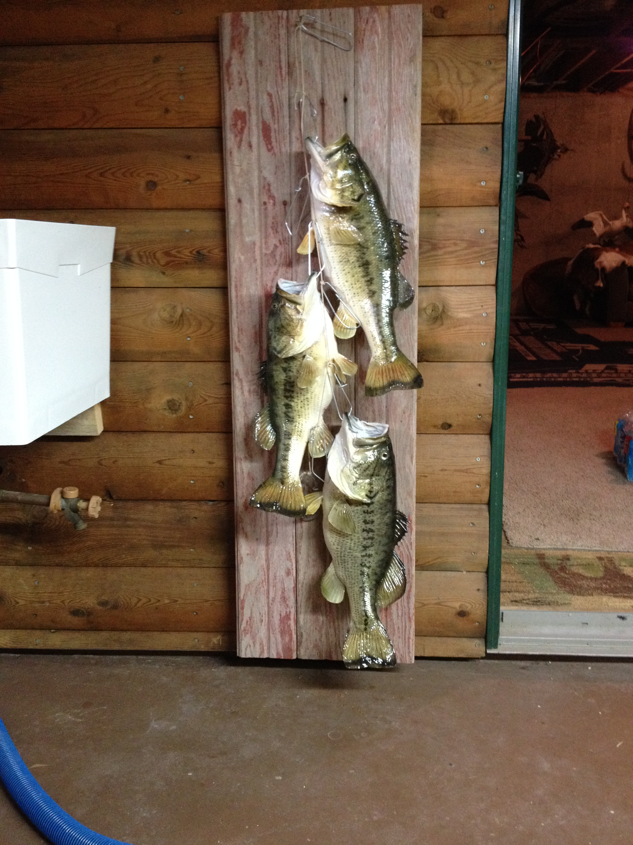 Fish mounts