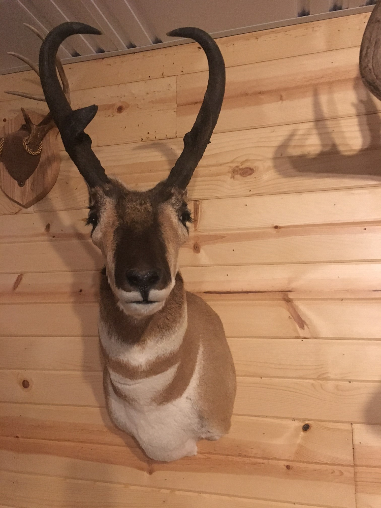 Log Home Taxidermy Taxidermist St  Louis and Edwardsville