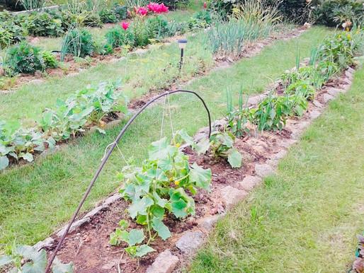 Садоводы отказываются от своего права собственности на земельный участок