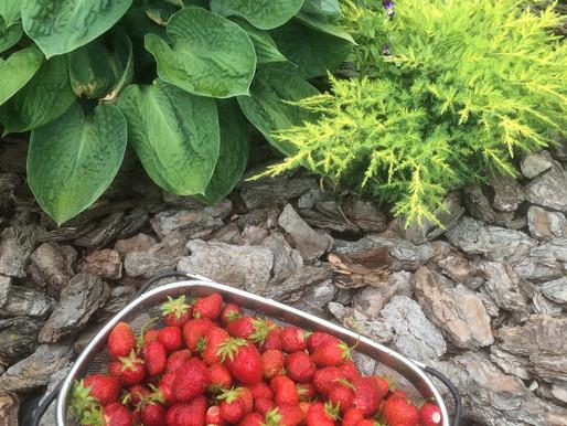 Где можно продать урожай садоводу?Для реализации урожая садоводам выделили г. Челябинске 500  мест