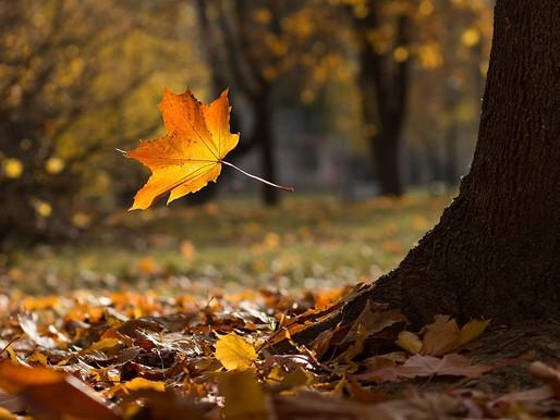 Осенний листопад в саду