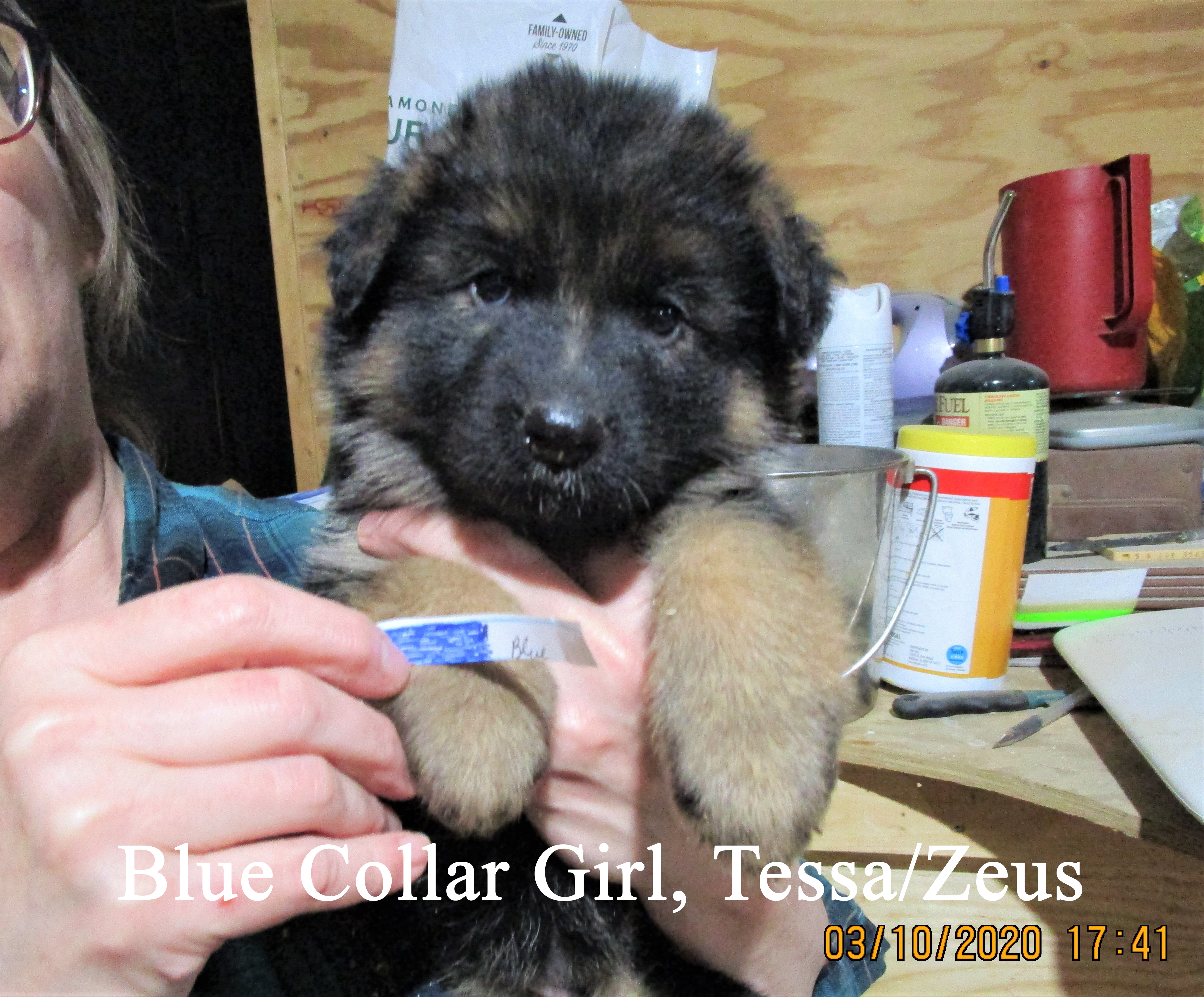 Blue Collar Girl, typed