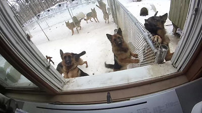 Mom video's the Luna Fulz Doggies