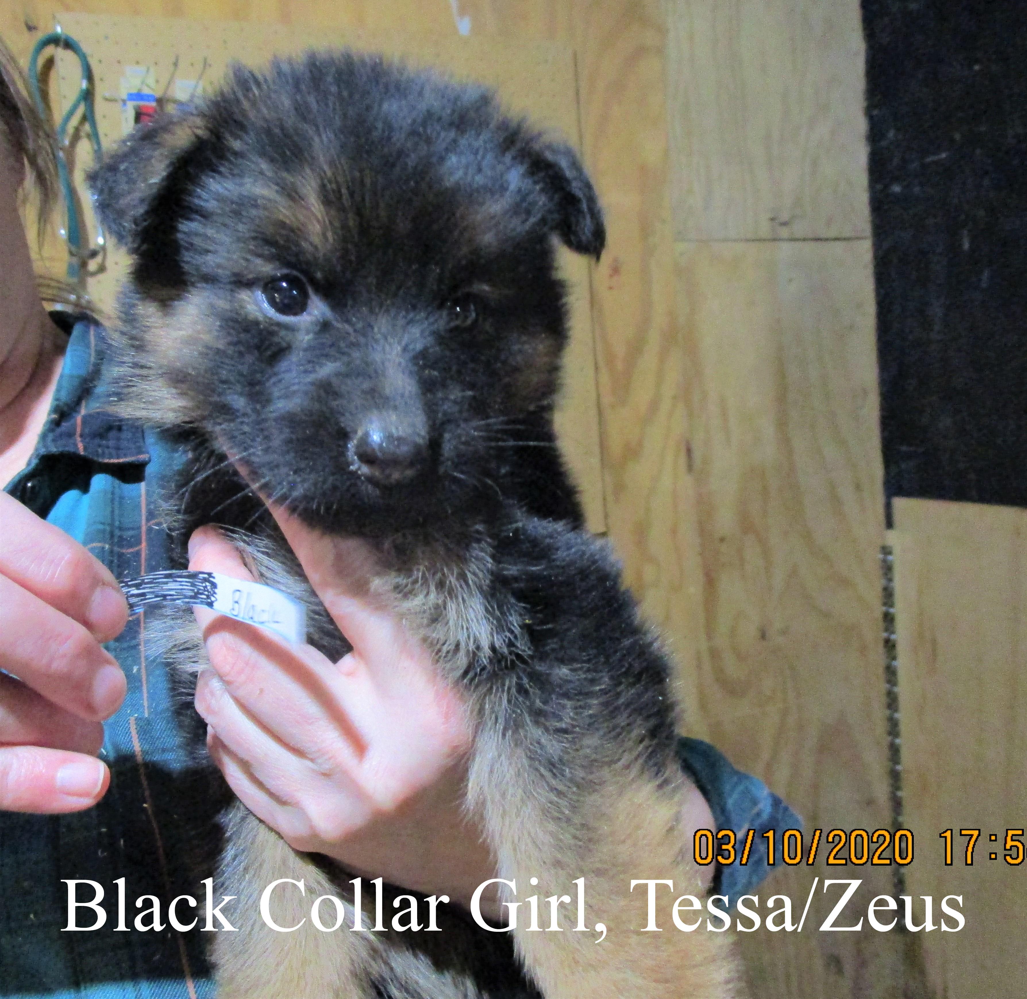 Black Collar Girl, typed