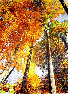 fall looking up.jpg