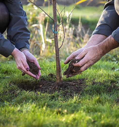 directors-planting-a-tree-2019.jpg