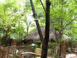 Jungle of Sri Lanka