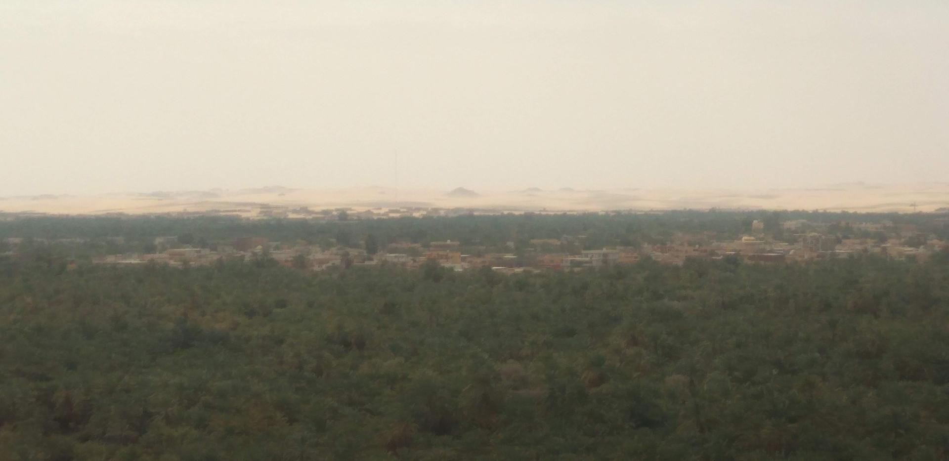 Biggest plantation of trees