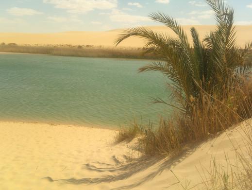 Siwa oasis