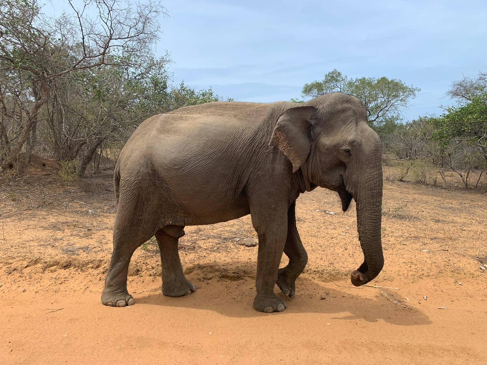 Elephant from Yalla