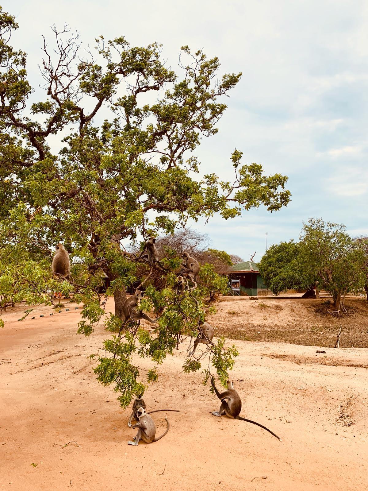 Yalla National park