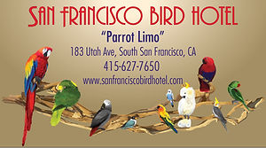 birdhotel-magnetic.jpg