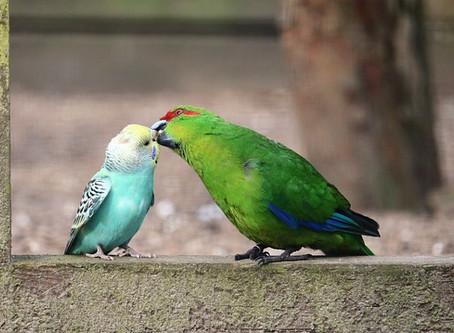 Parrot Longevity