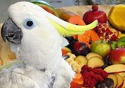 Triton FruitE.jpg