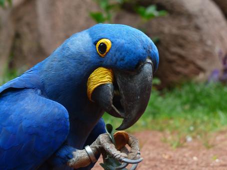 Parrot Shapes & Sizes