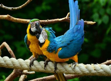 Do Parrots Divorce?