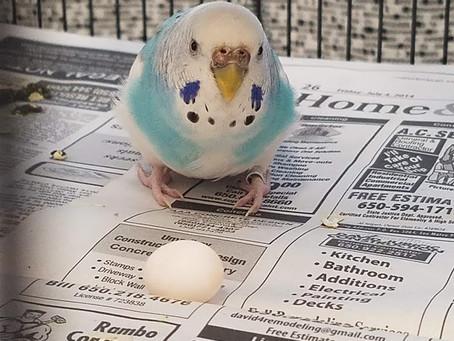 Parrot Paternity Leave?