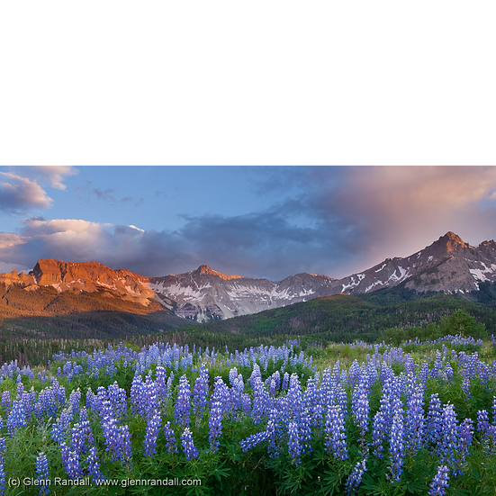 Lupine and the Sneffels Range