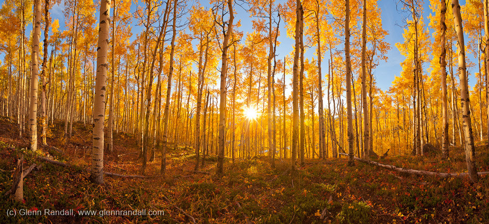 Aspen Panorama, San Isabel National Forest, Colorado
