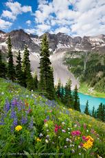 Wildflowers Above Blue Lake
