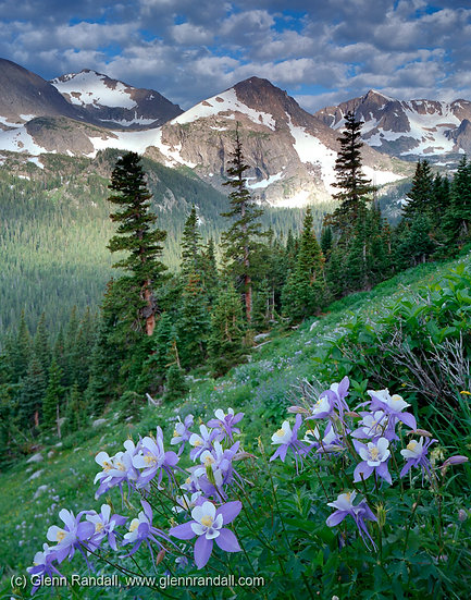 Columbine along the Trail to Arapaho Pass, Indian Peaks Wilderness, Colorado