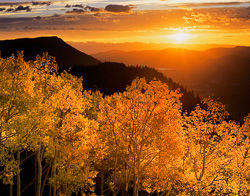 Sunrise Aspen, Rocky Mountain National Park, Colorado