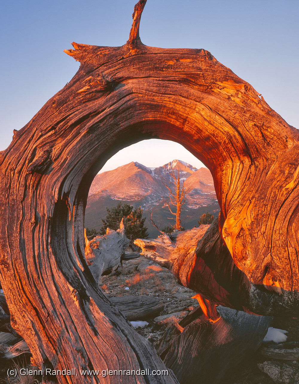 Ancient limber pine on Twin Sisters and Longs Peak at sunrise, Rocky Mountain National Park, Colorado.