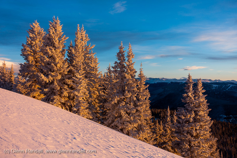 Frosted trees at sunset along the west ridge of Bald Mountain, in the Gore Range near Vail, Colorado