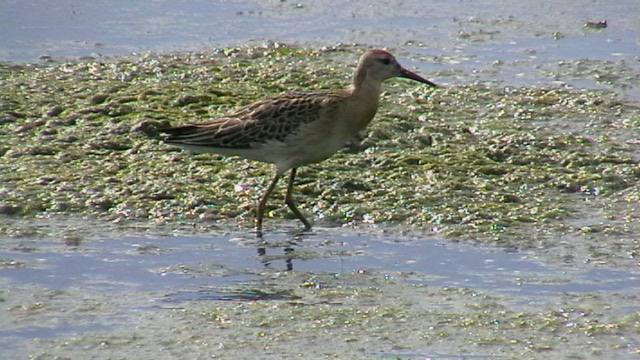 птица на заливе3