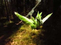 Дыхание весны 2