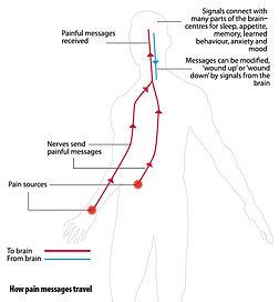 undertanding pain 1.JPG