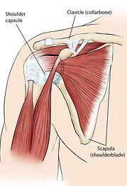 compr_a00071f01_normal-shoulder-anatomy_