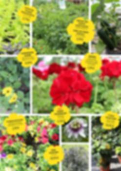 Angebote zum Tag der offnen Gärtnerei Löber in Hünfelden-Kirberg