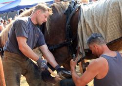 Pferdeschau auf dem Dauborner Markt