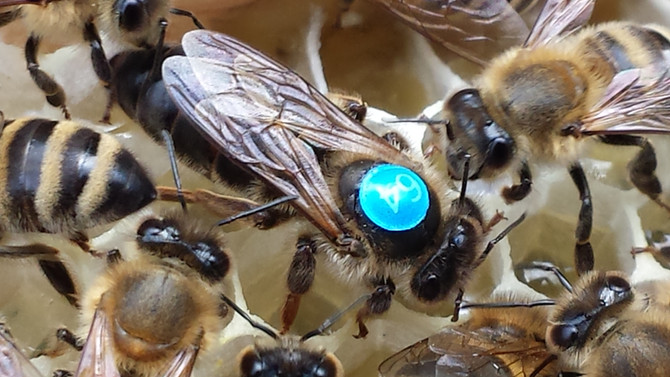 Ohne Bienen kann die Menschheit einpacken - Bienenzuchtverein Wörsbachtal e.V.