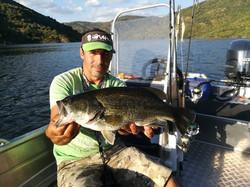 Black Bass Douro