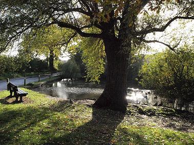 Shrubland Pond