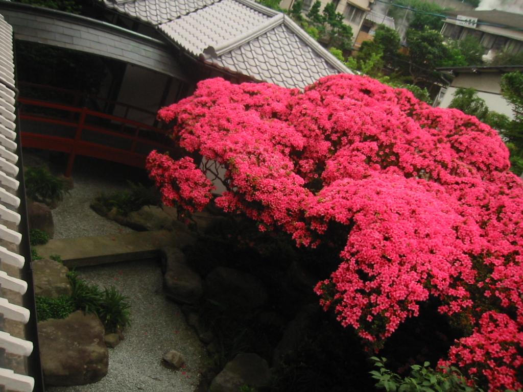 fujiya 092.jpg