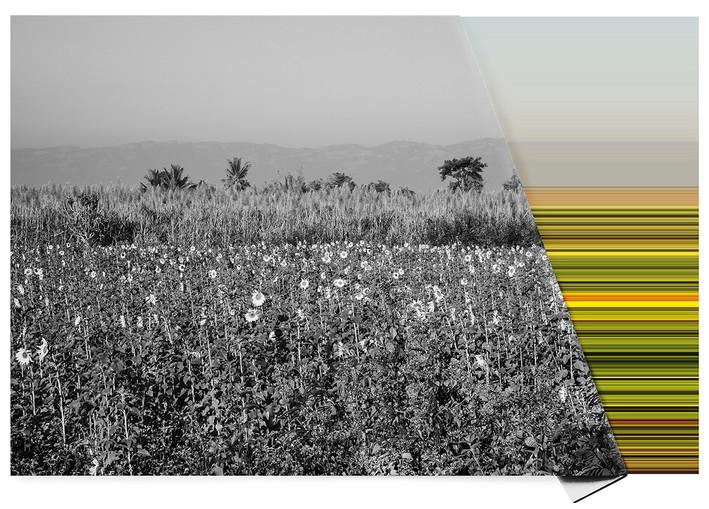 Landscape on Landscape Cod: #f8df0e .jpg