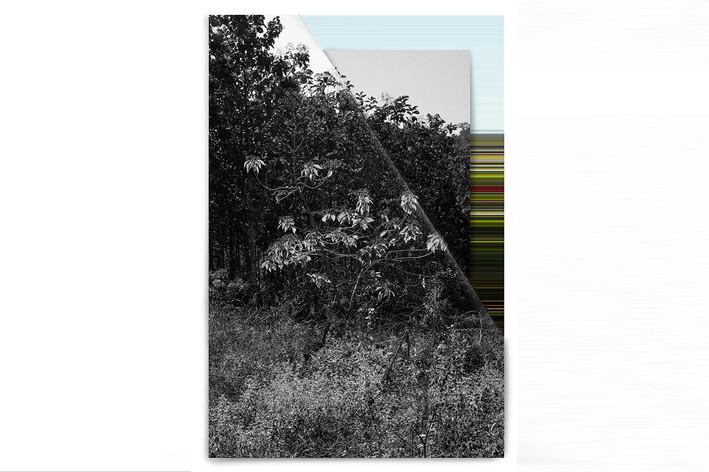 Landscape_on_Lanscape_C8E1E7.jpg