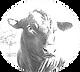 black-angus-bull-2-hans-droog 2.png