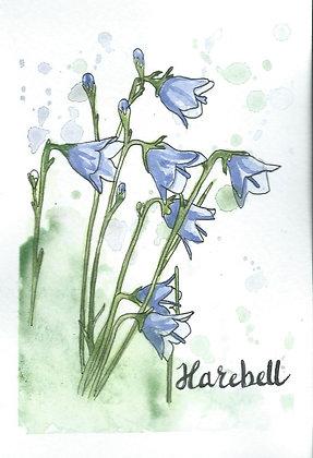 Harebell Postcard