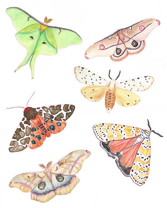 Moth Sticker Pack
