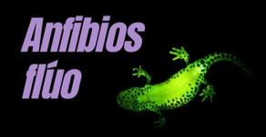 Anfibios flúo