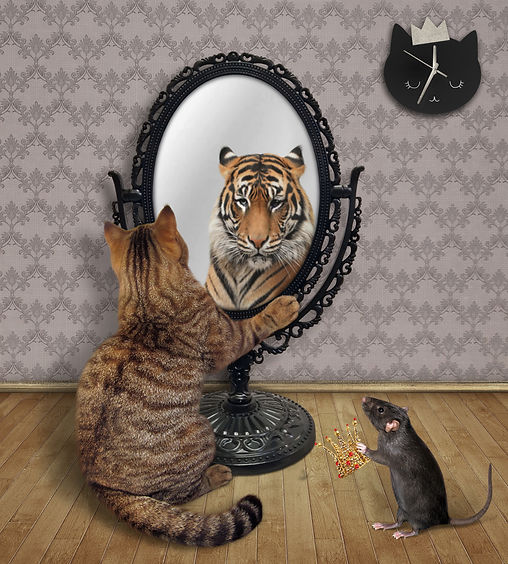 A cat stares his reflection in a mirror
