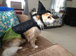 Sunny hates her witch costume